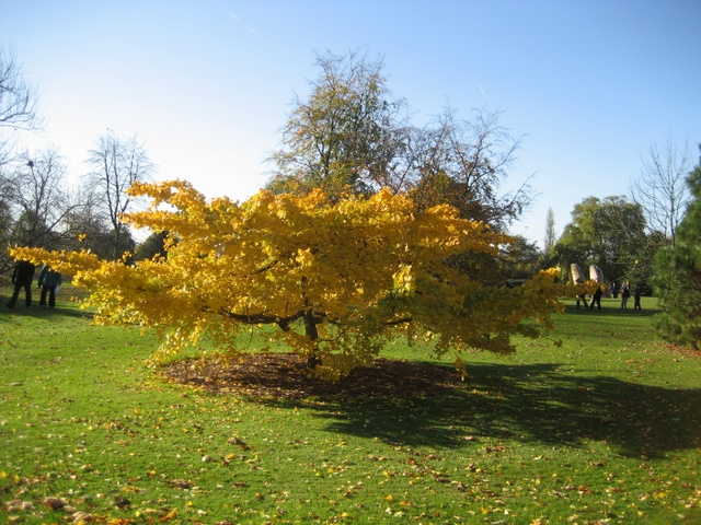 Kew Gardens Colour 1