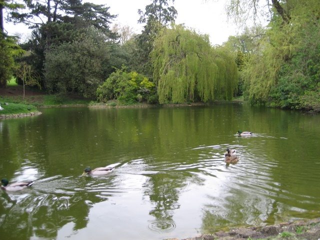 Lake in Royal Victoria Park